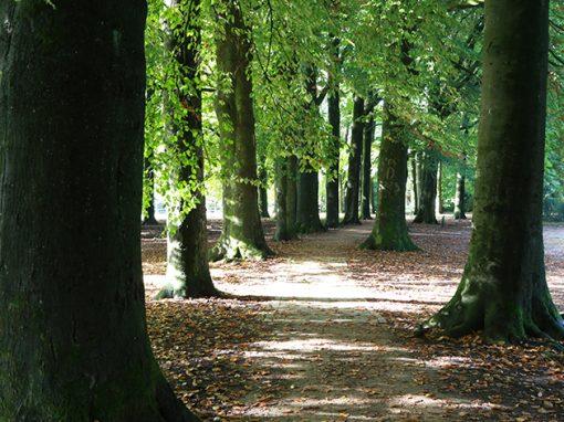 Batoswijk8